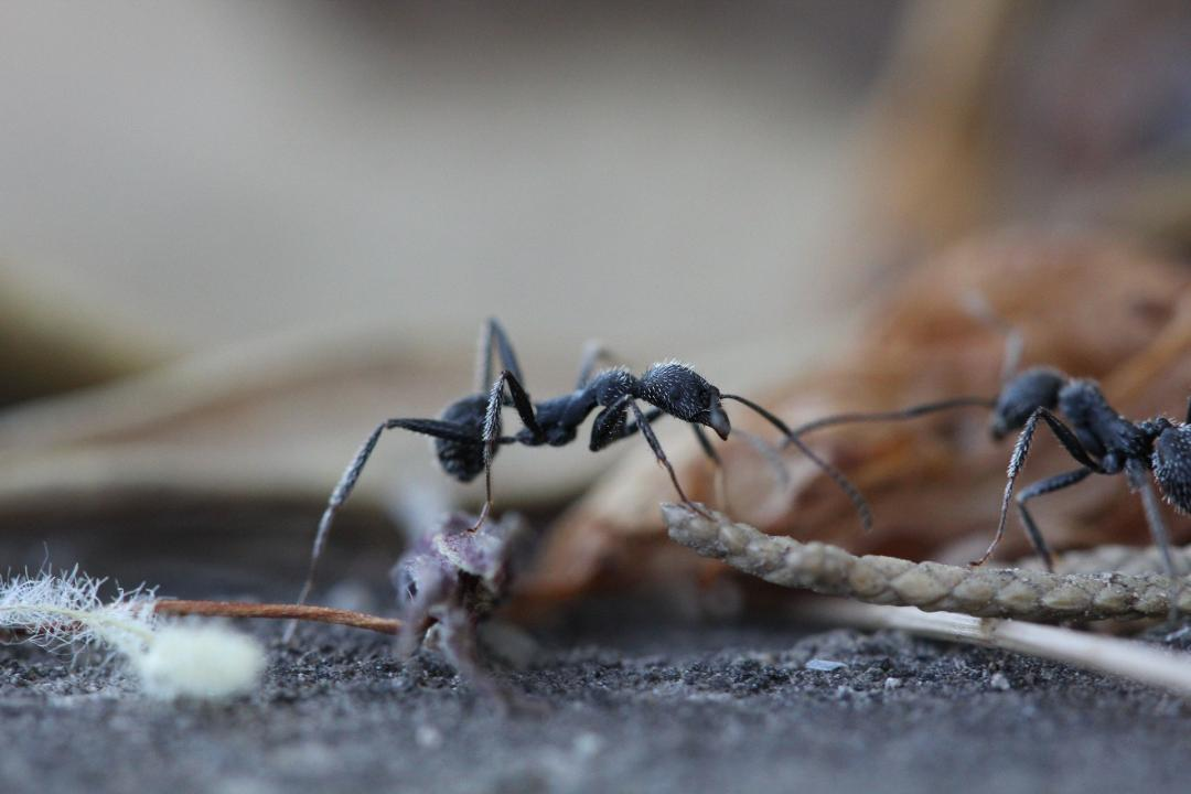 What Do Ants Have To Do With Diabetes Mysugr